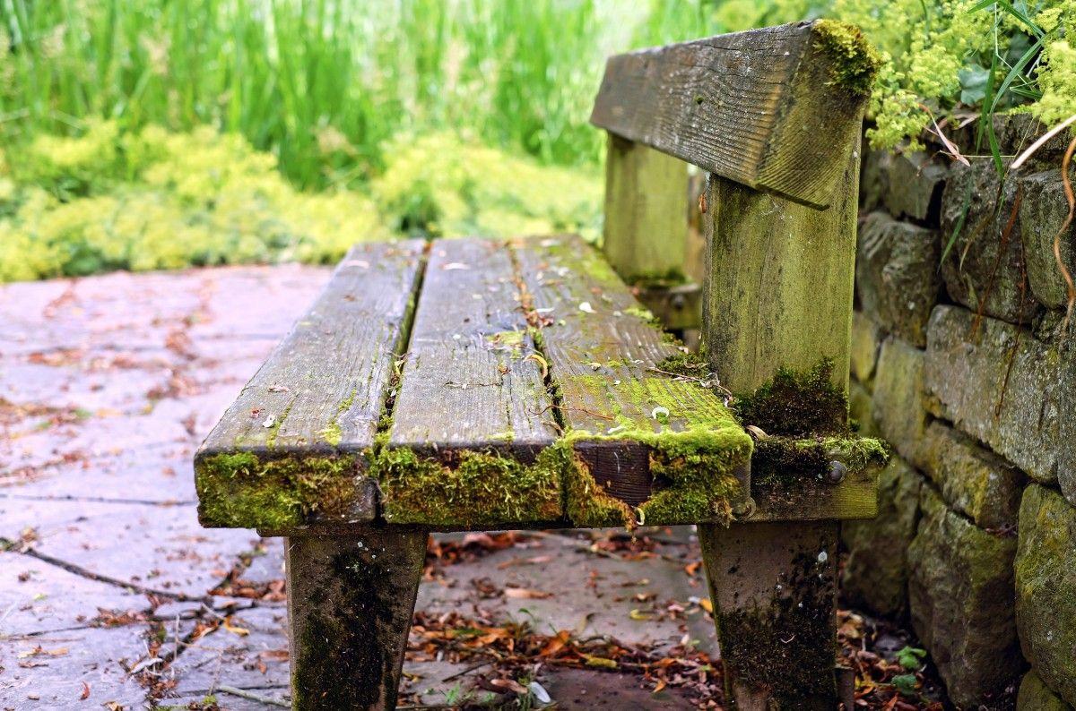 Images Gratuites Arbre La Nature Foret Feuille Vert Jungle L