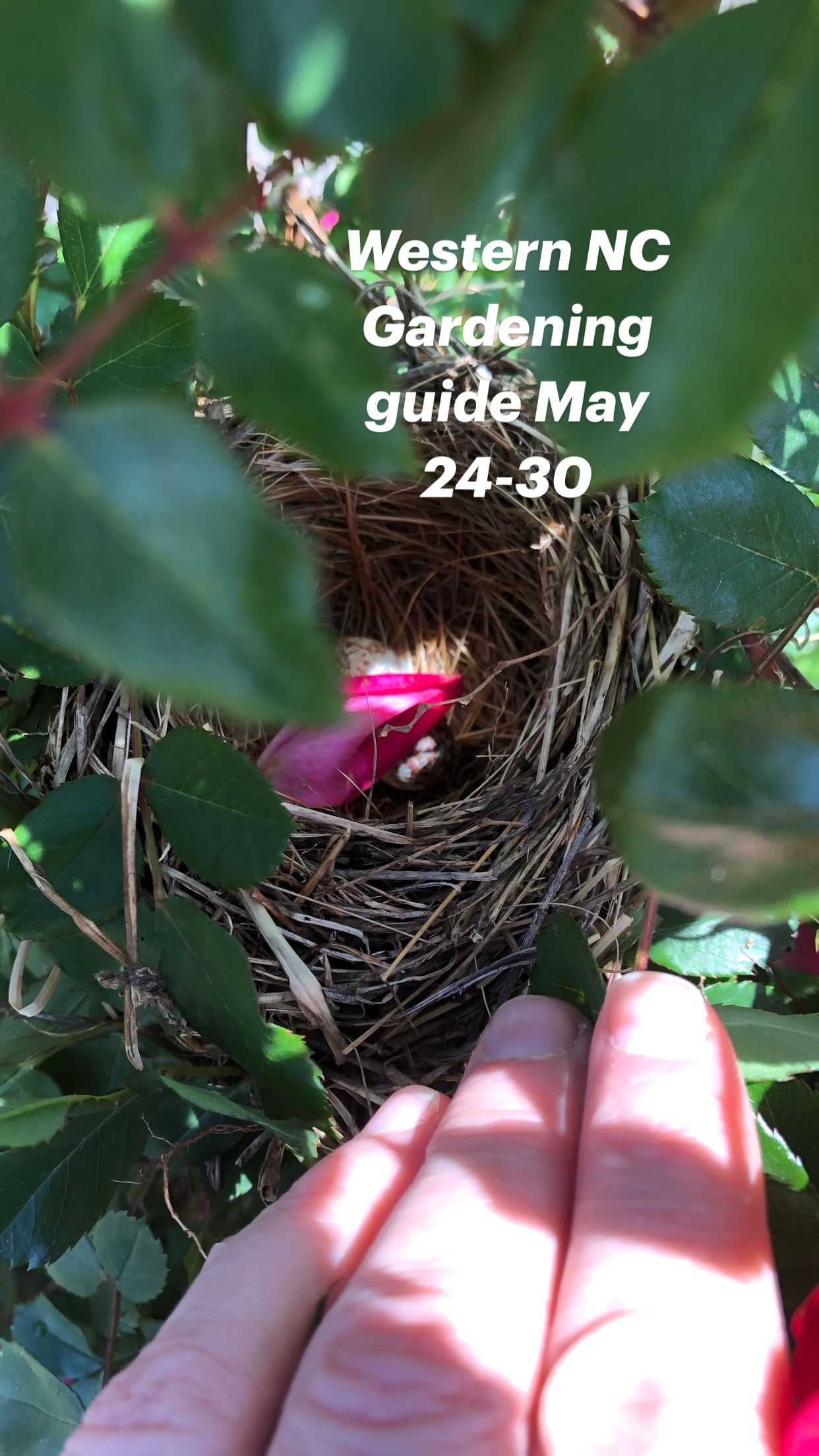 Western NC  Gardening guide May 24-30