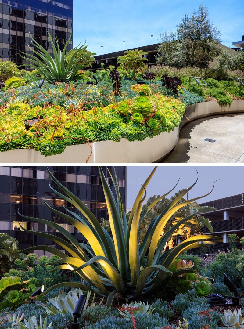 A Variety Of Plants Have Been Used In This Modern Garden Textural Foliage And Large Scaled Pla Healing Garden Succulent Landscape Design Succulent Landscaping,Commercial Interior Design Questionnaire