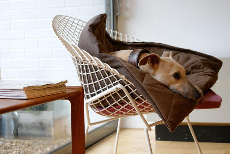 pets on furniture - süsser hund oder?