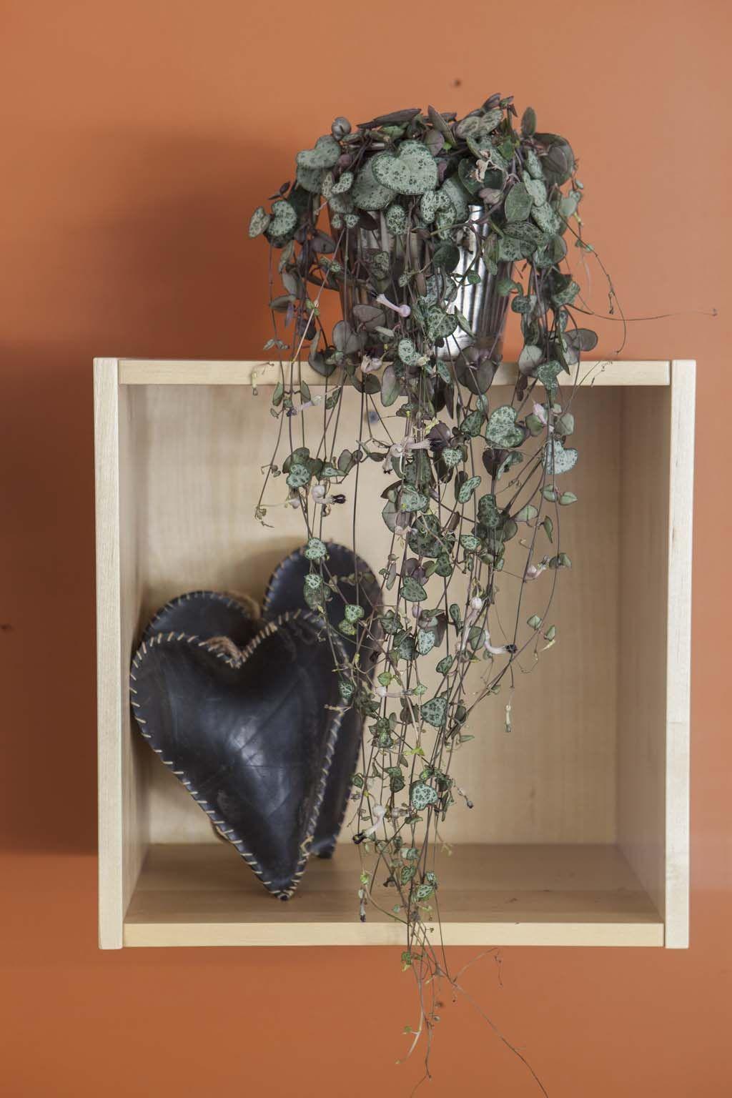 Grønne planter passer fint i den globale interiørstilen; http://www.mestergronn.no/blogg/global-og-leken-interiorstil/