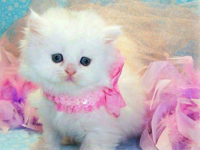 Cute Baby Kitten In Pink Http Ift Tt 2dpiukf Cute Baby Cats