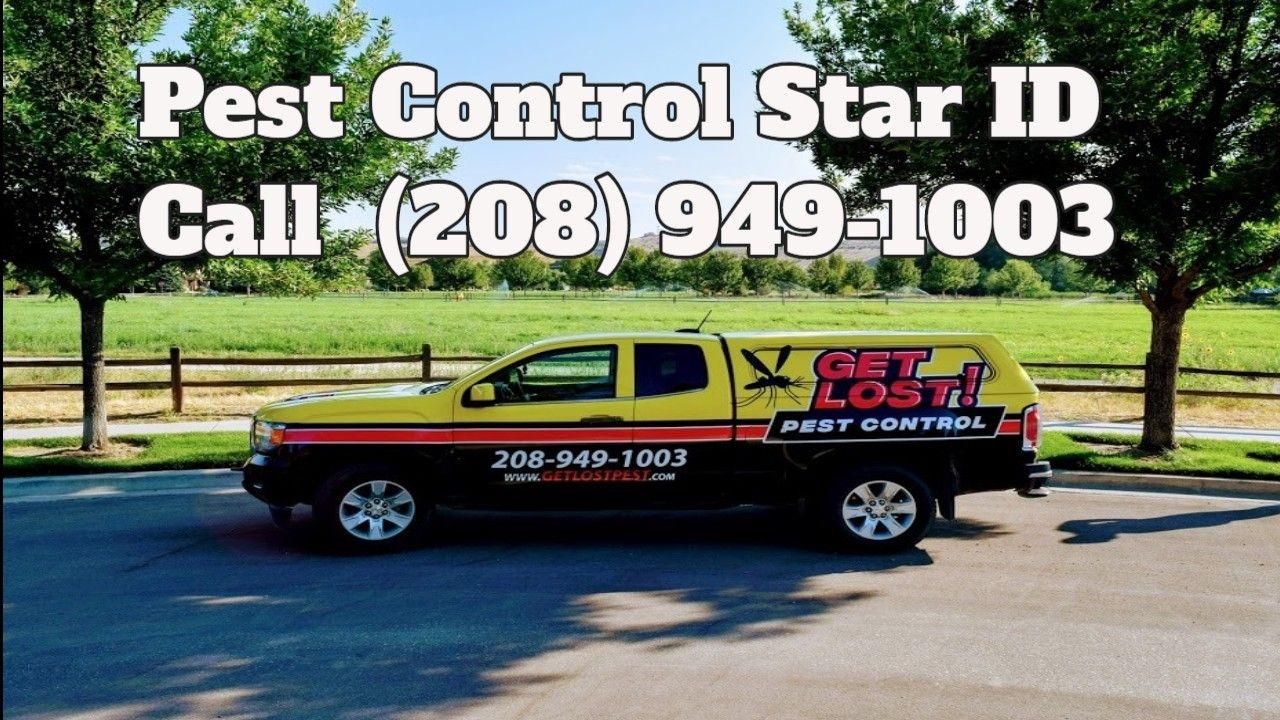 Pest Control Star Id Https Lexisinnett1 Wordpress Com 2019 08 28 Pest Control Star Id Pest Control Control Pests