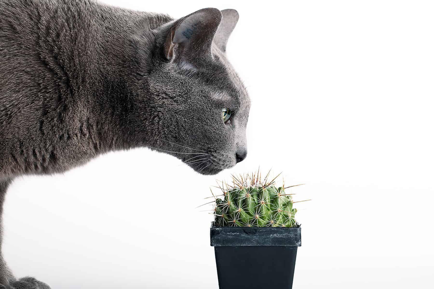 47 Roslin Trujacych Dla Kota Pozbadz Sie Ich Z Domu Zdjecia Best Indoor Plants Indoor Plants Animal Lover
