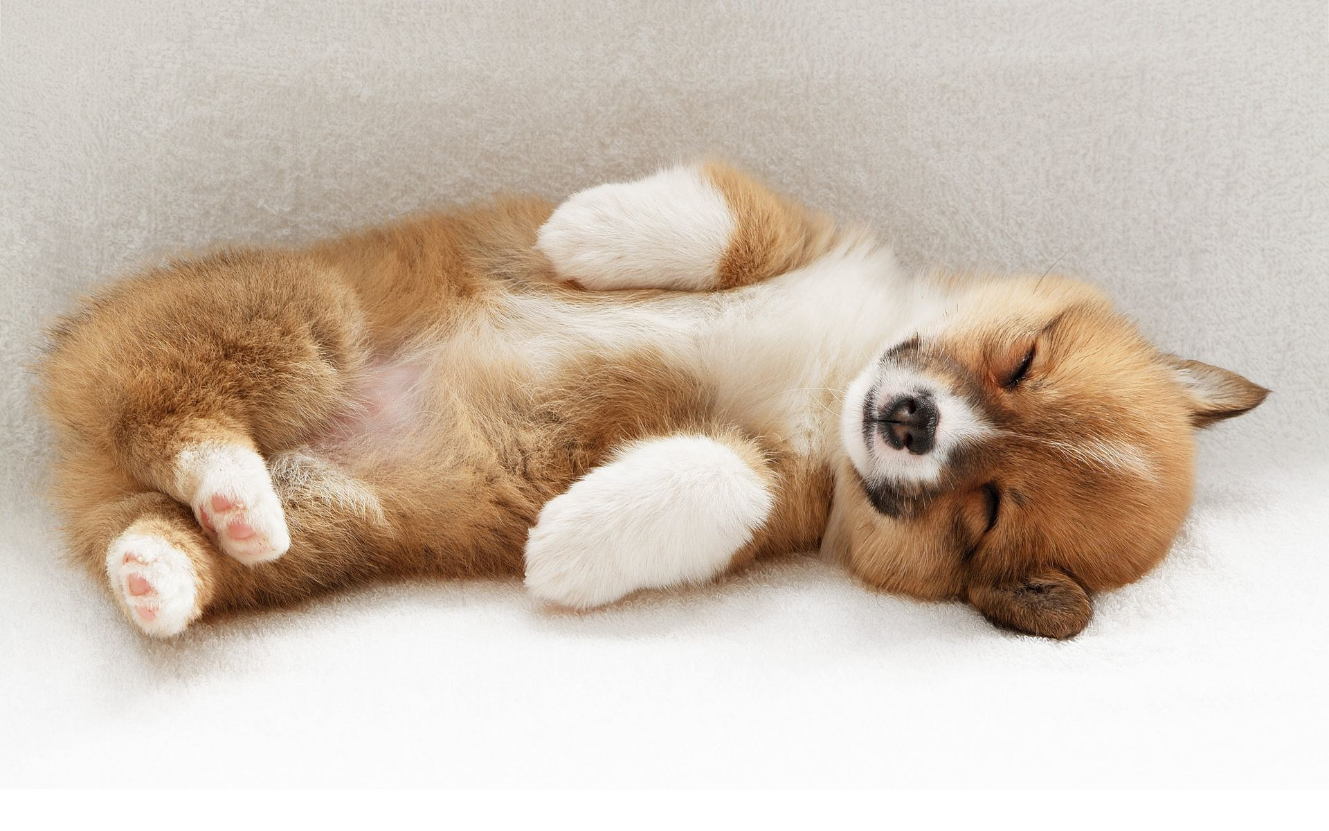 Puppies cute sleeping wallpaper 2019