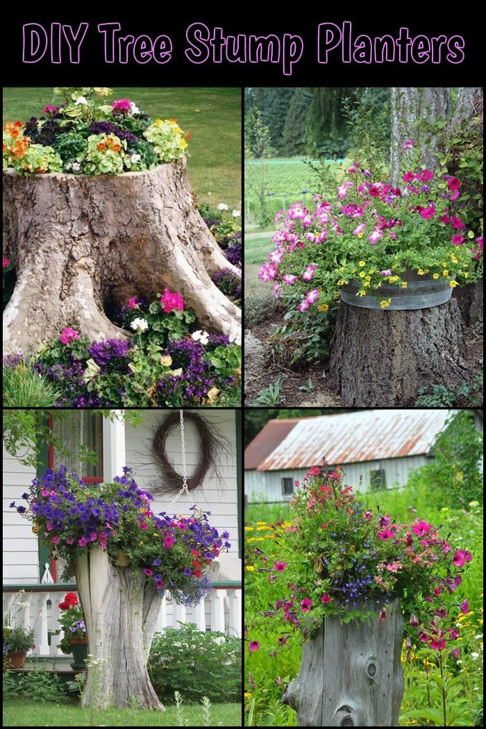Delicieux How To Turn A Tree Stump Into A Planter