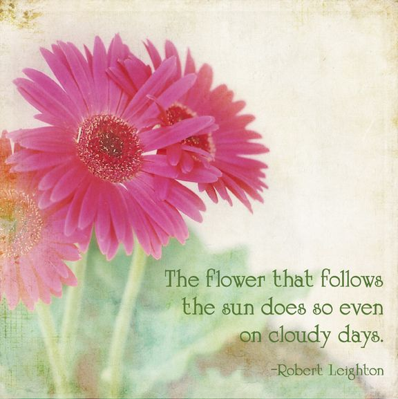 Pretty As A Flower Quotes: Quotes About Daisies Flower