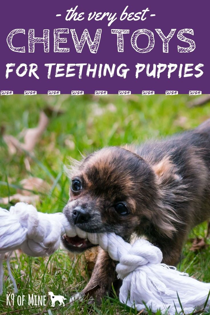 how to ease a teething puppy