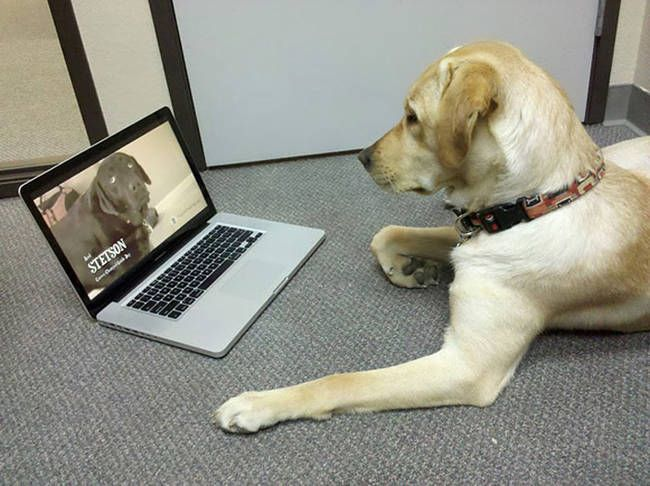These 18 Savvy Pets Know Their Way Around Technology Better Than You Do