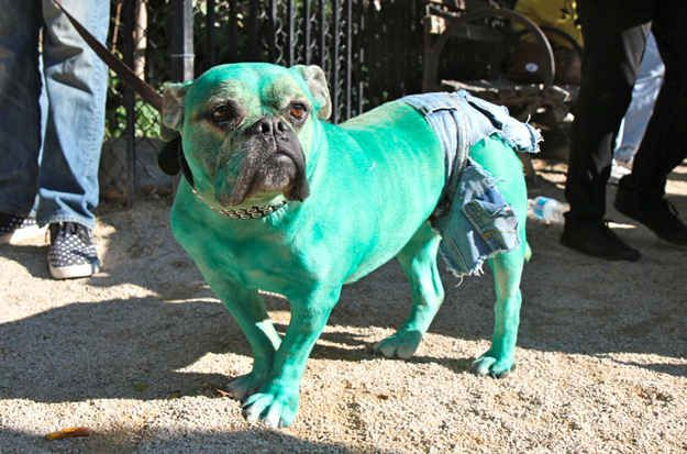 Hulk Dogs Cool Costumes Dogs Puppies