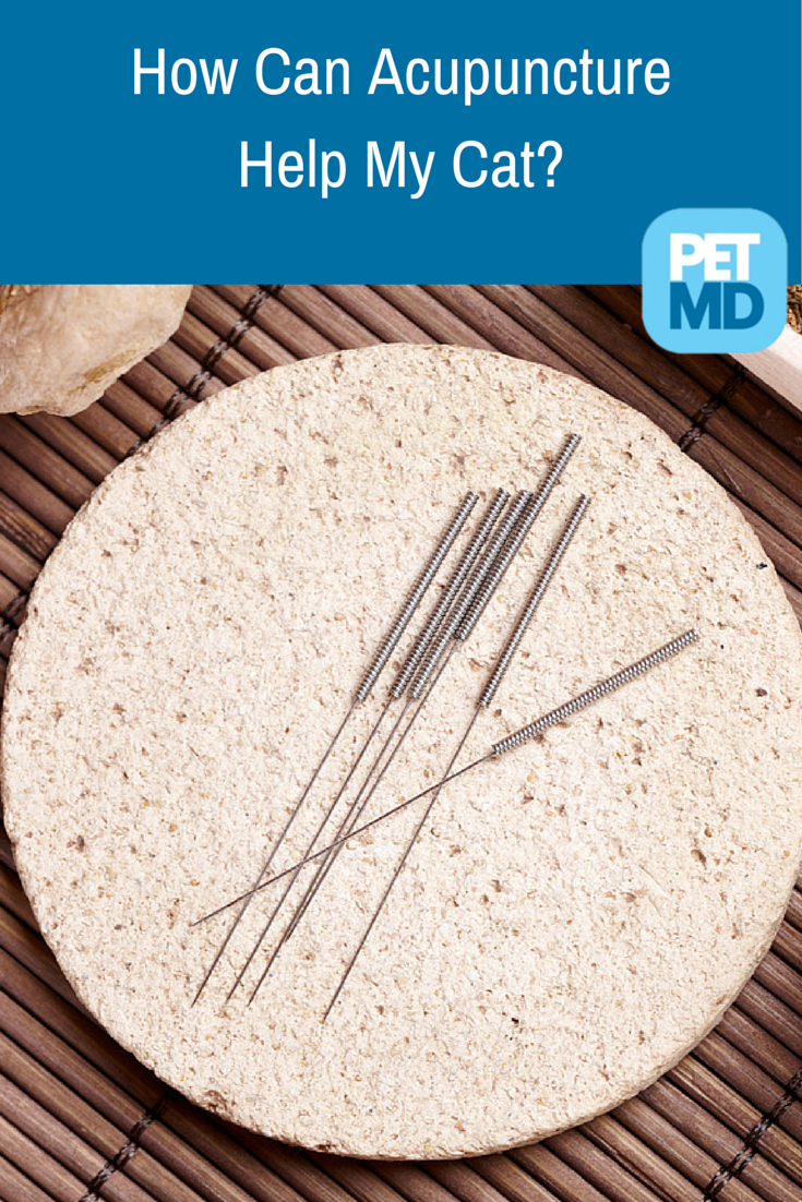 Did you know there is such a thing as acupuncture for cats and that it can help your kitten deal with any disorder such as allergies? See it for yourself!