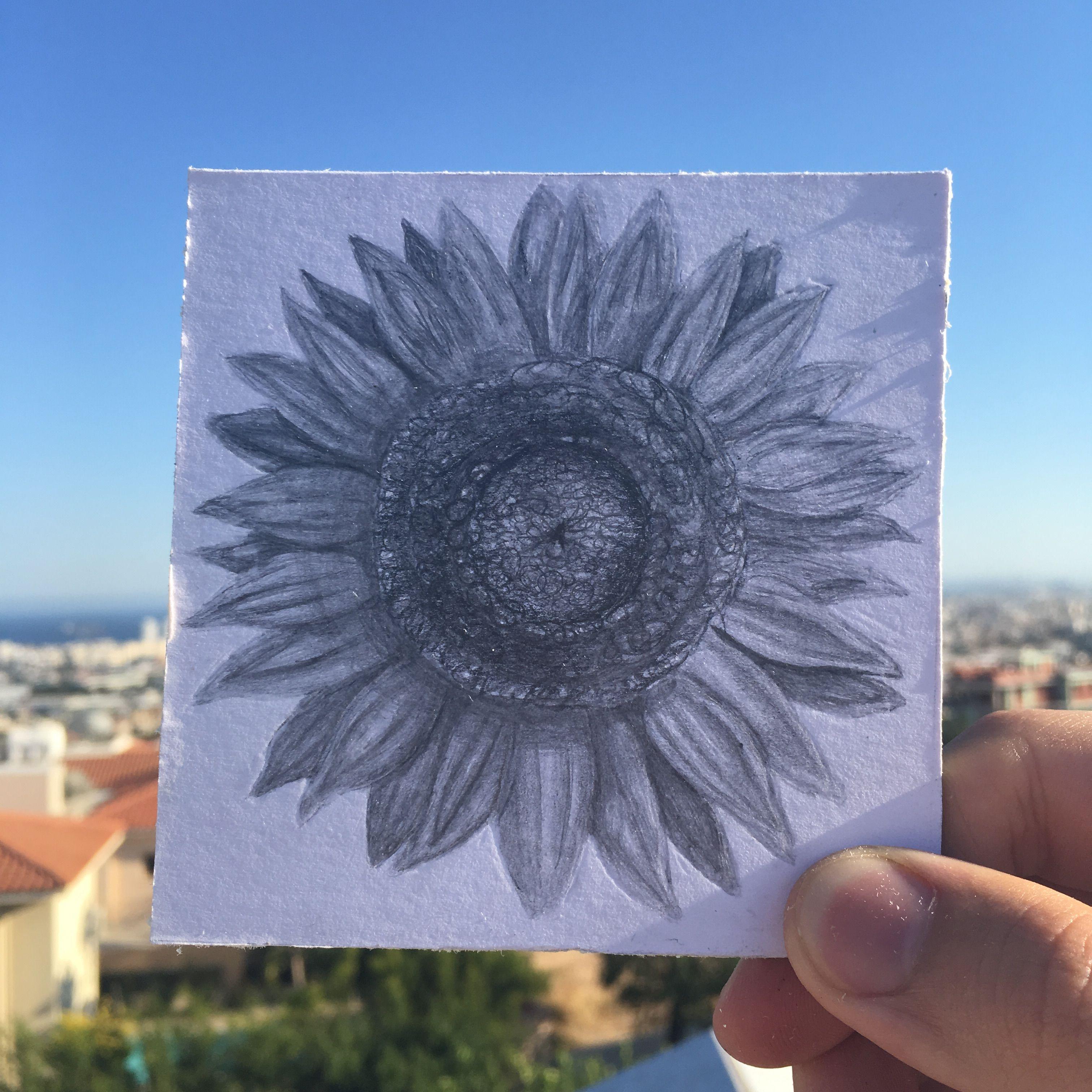 Sunflower, Iliou