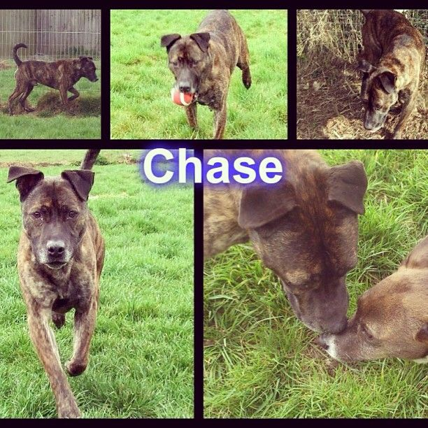 Beautiful Chase is urgently looking for rescue :( He has been waiting since the start of February :'( #safeandsound #rescue #rescuedog #dontshopadopt #dog #newlife #happy #love #givesomuch #giveadogachance #somanyneedanewhome #adoption #pet #beautiful #bestfriend #mansbestfriend www.safe-and-sound.org