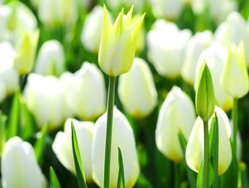Terkeren 13 Foto Bunga Untuk Profil Wa 40 Gambar Bunga Cantik Indah Bagus Comel Foto Foto Stok Gratis Tentang Foto Gambar Hdr Di 2020 Bunga Tulip Bunga Pansy Bunga