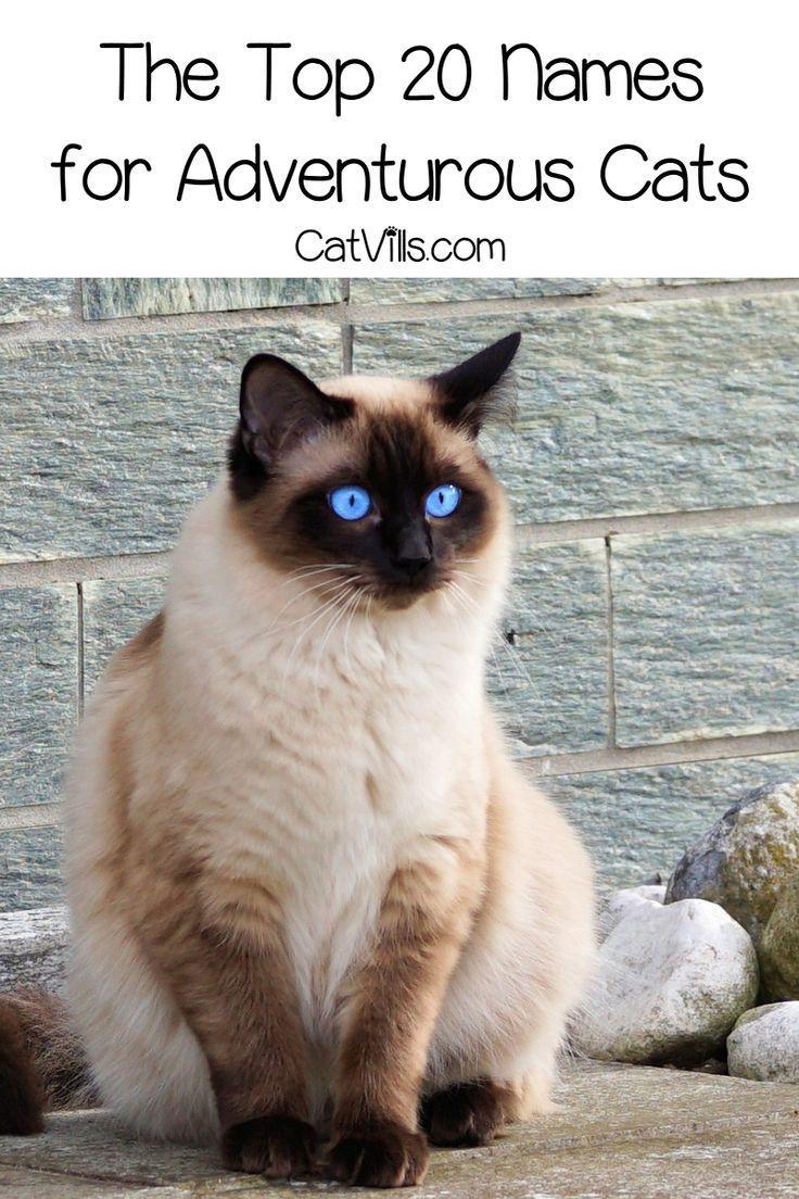 The Top 20 Adventurous Cat Names for Males & Females Cat