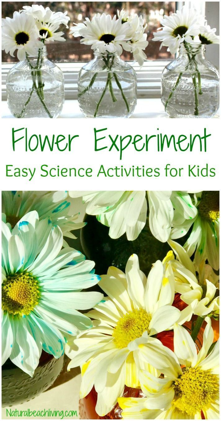 Easy Flower Science Activities for Preschool and Kindergarten ...