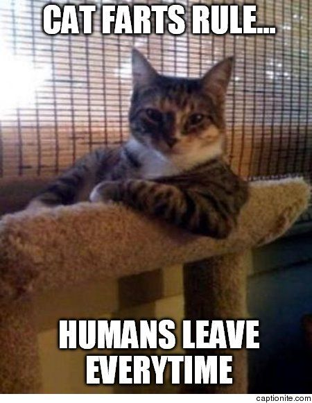 Cat Farts Rule Humans Leave Everytime The Most Meme - 20 hilarious cat photos captioned comedians