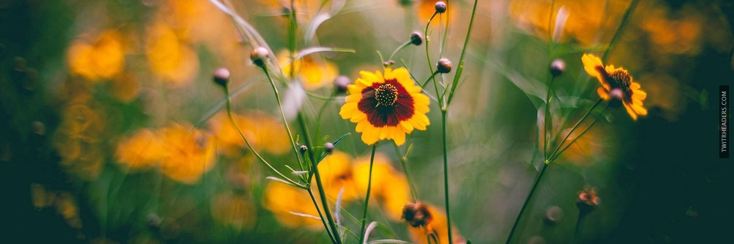 Yellow Flowers Field Nature Twitter Header Cover