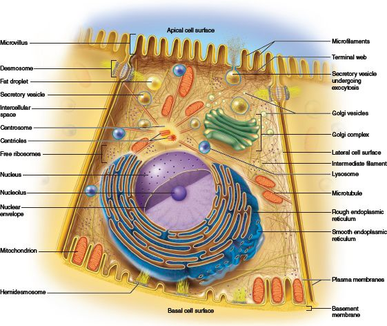 This Photo Provides An Overview Of The Cell Organelles And