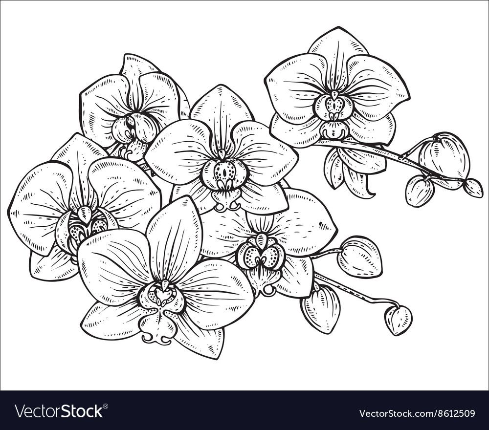 Beautiful Monochrome Floral Bouquet Of Orchid Vector Image Affiliate Floral Monochrome Beautifu Orchid Drawing Flower Drawing Tutorials Flower Drawing