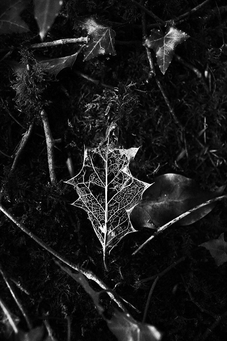Pin by sunshine grey on dark nature pinterest photography