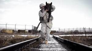 Working dog   Military and Working Dogs   Pinterest