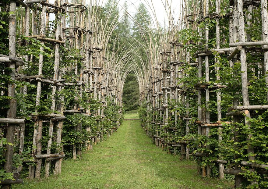 A majestic cathedral made of living breathing trees land art