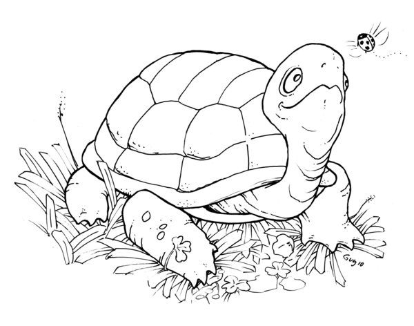 Free Printable Turtle Coloring Pages For Kids Picture 33 Animal Coloring Pages Turtle Coloring Pages Digital Stamps