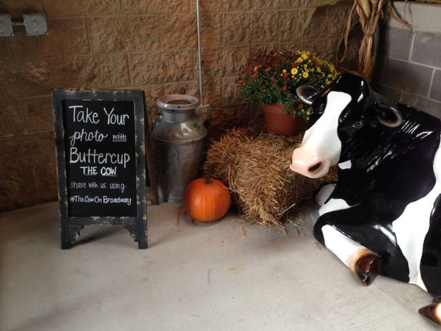 Buttercup COW 02