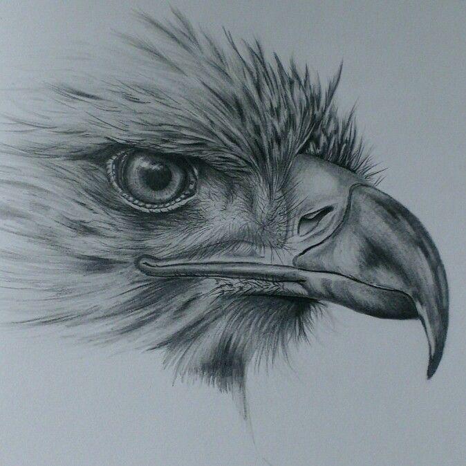 Eagle drawing in pencil … | Рисунки, Рисунки углем ...