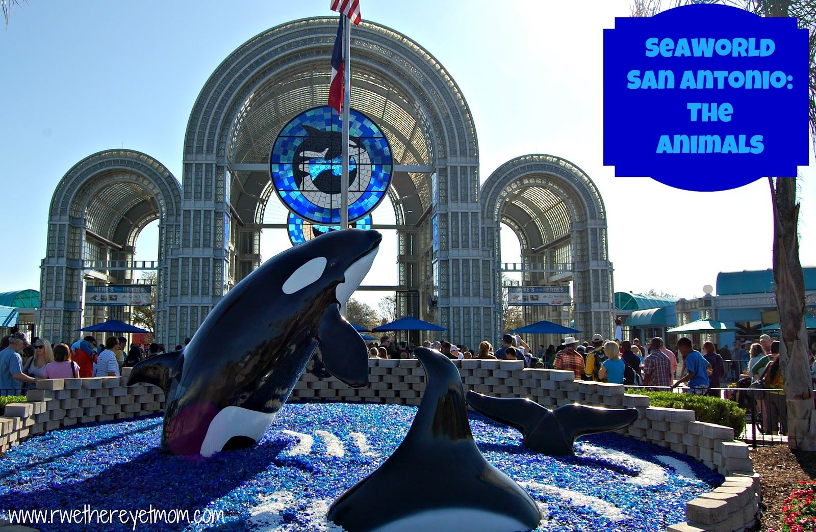 Seaworld San Antonio What S The First Thing You Think Of