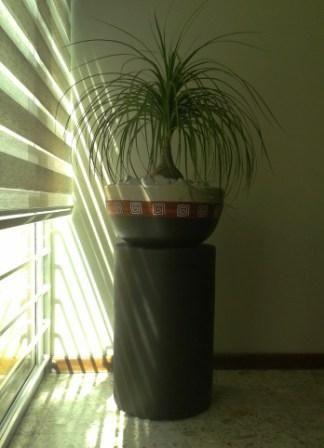 Maceta bold con pata de elefante con base pedestal cilindro en chocolate disponible en www - Pedestal para plantas ...