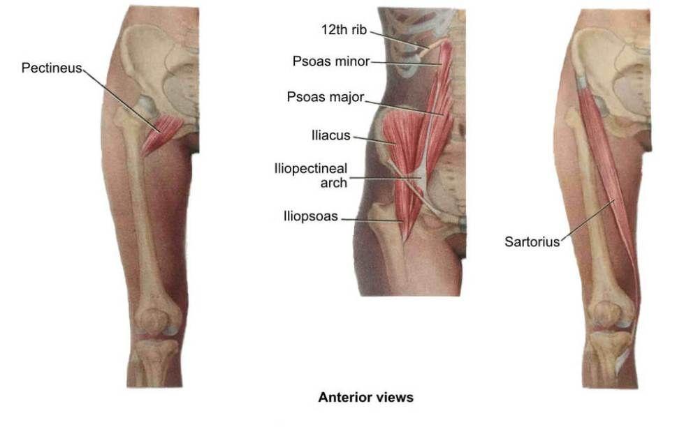 Hip Flexors   Hip Stretches & Quad Stretches   Stretch, PT ...