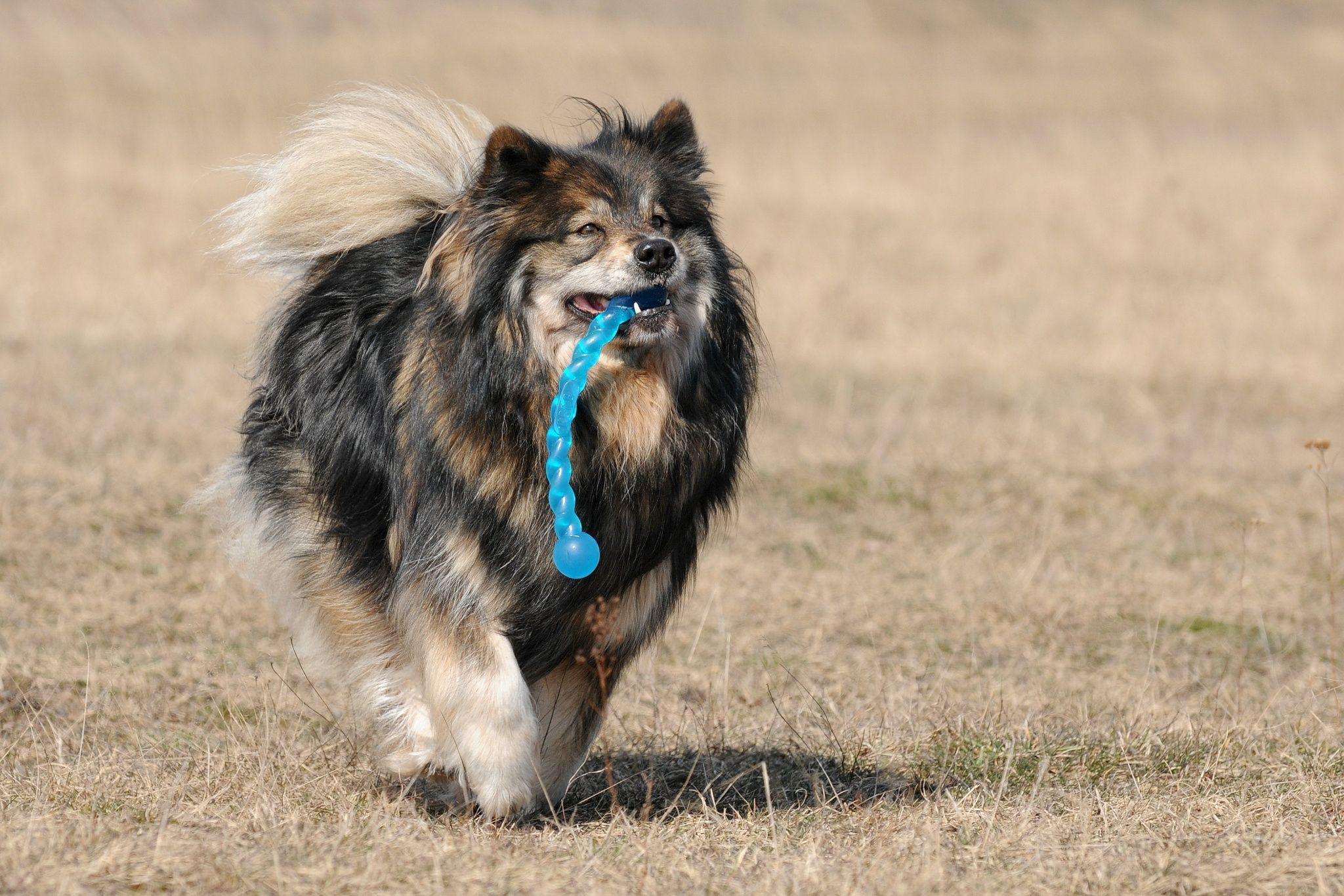 Elo Hund Dog On The Run By Heike Klett On 500px Hunde Hunde Bilder Hundebilder