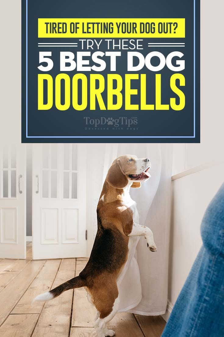 Top 5 Best Dog Doorbells And Housetraining Bells For Dogs In 2017 House Training Dogs Your Dog Socializing Dogs