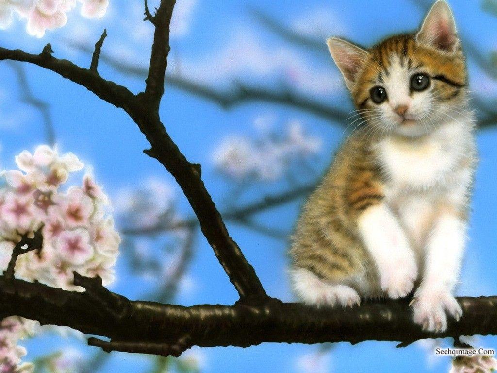 Kittens images Cute Kitten Wallpaper HD wallpaper and
