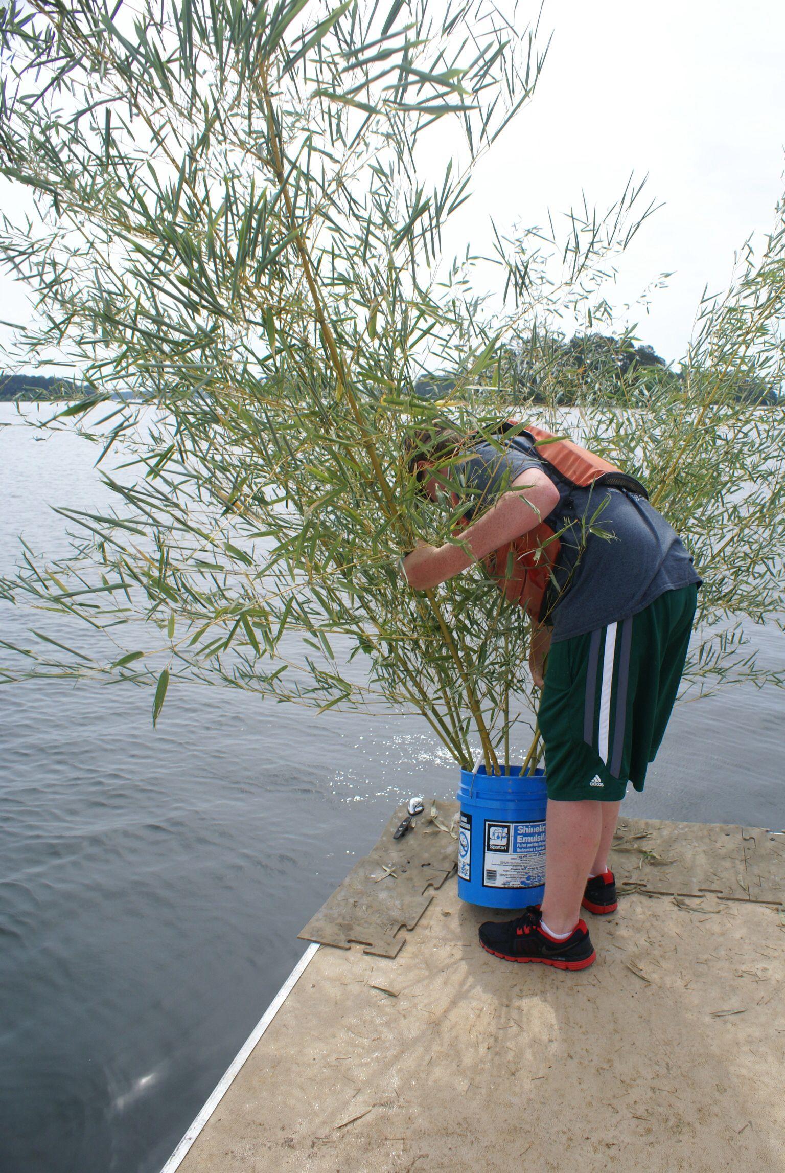 Fish Habitat Bamboo Crappie Condos Centerpoint Ffa