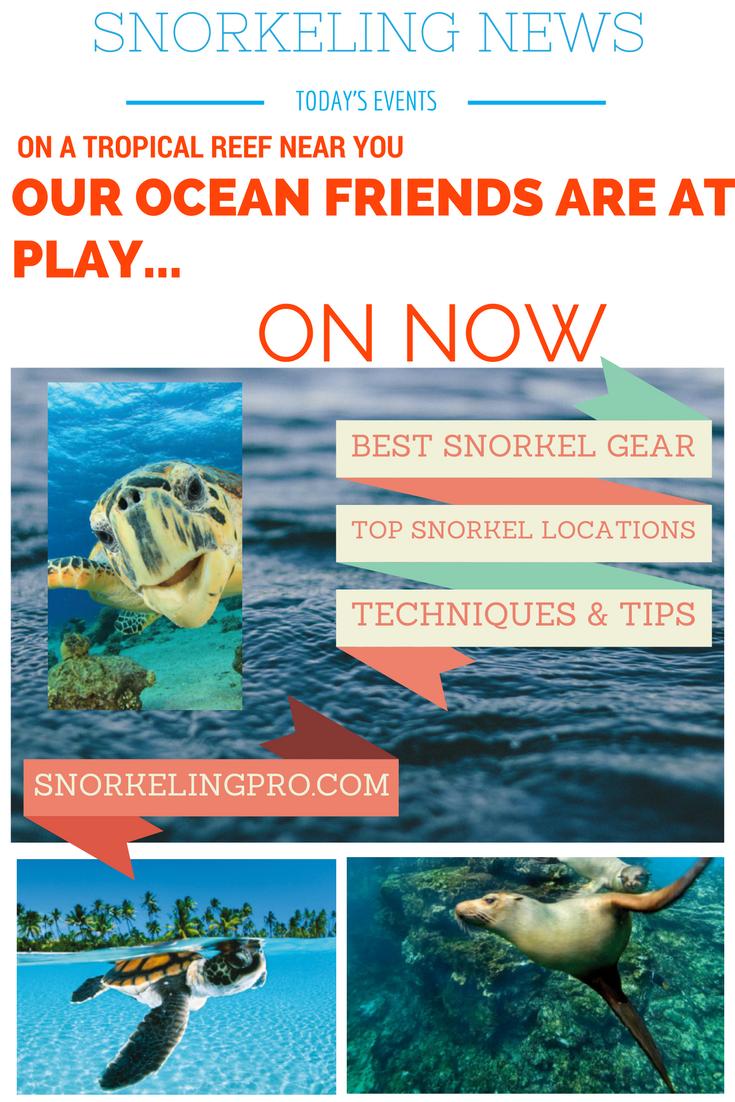 Go Snorkel!