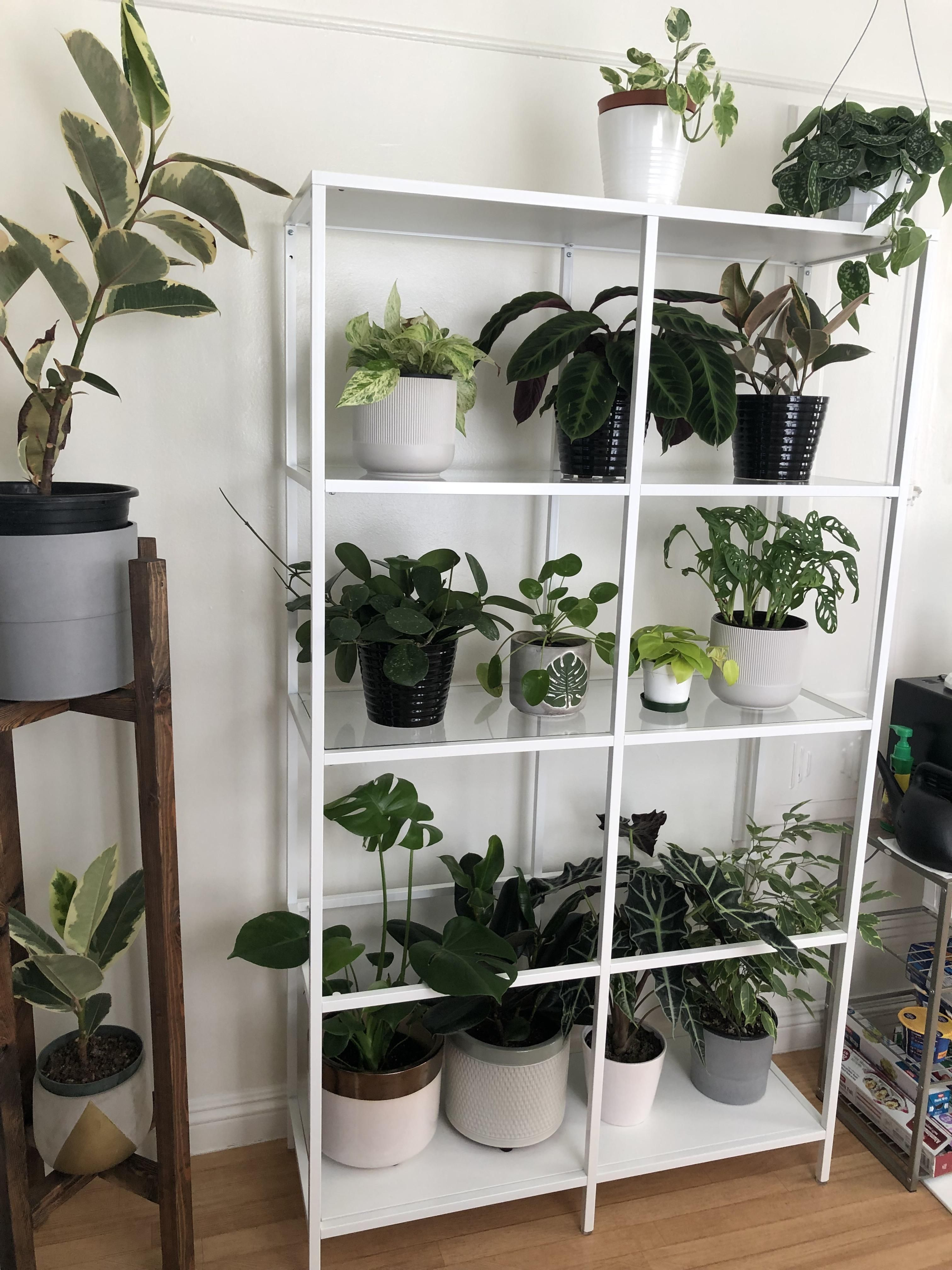 Ikea Shelf Unit For Some Of My Plants It Turned Out So Great