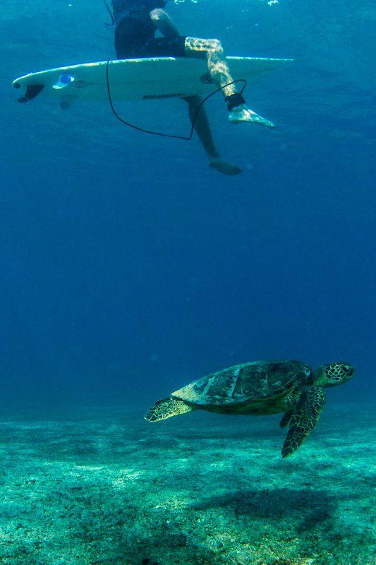 Underwater... Hawaii... Photo: John Maher Photography...