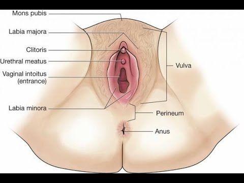 Clip massage vulva