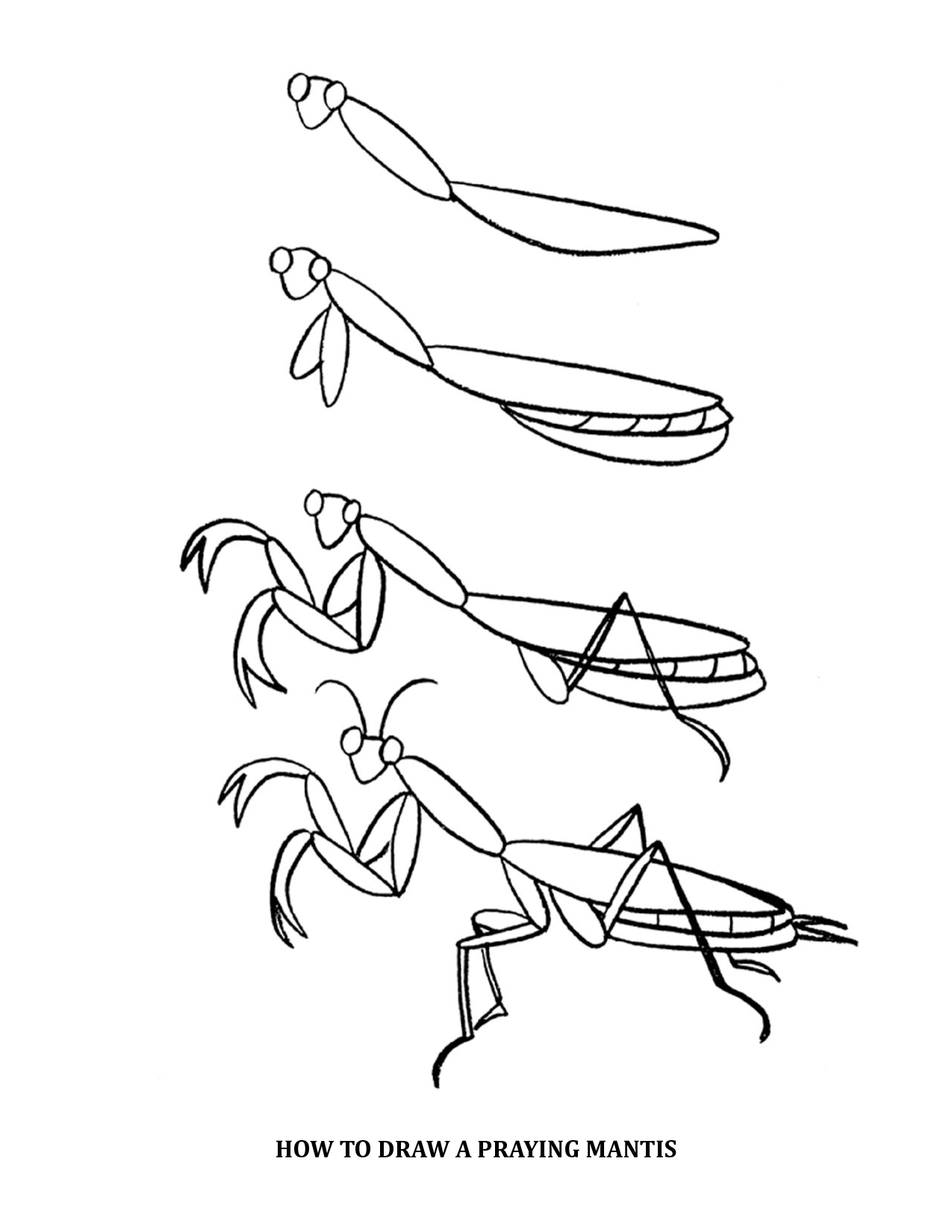 How To Draw A Praying Mantis How To Draw A Praying Mantis