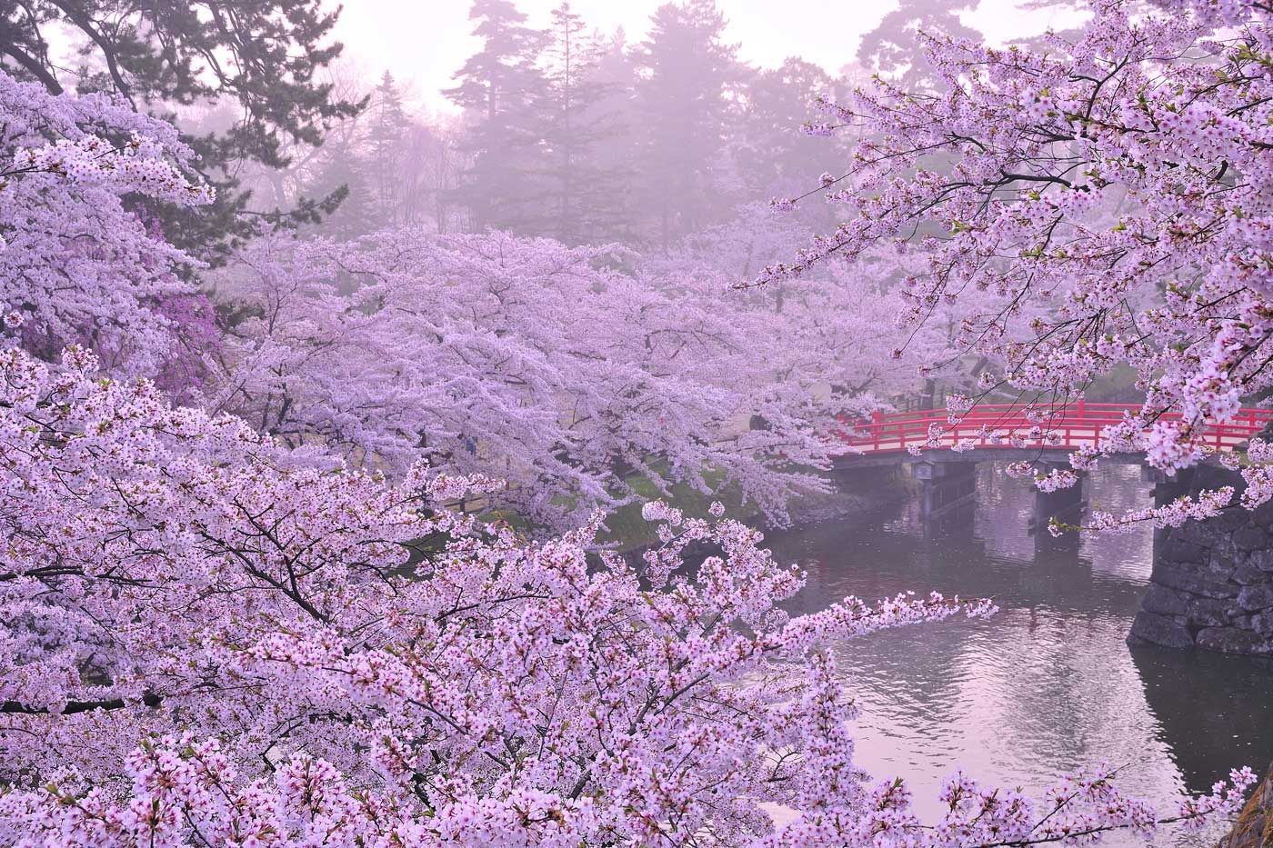 Enjoy These Beautiful Destinations Covered In Cherry Blossoms Cherry Blossom Japan Beautiful Backgrounds Landscaping Images