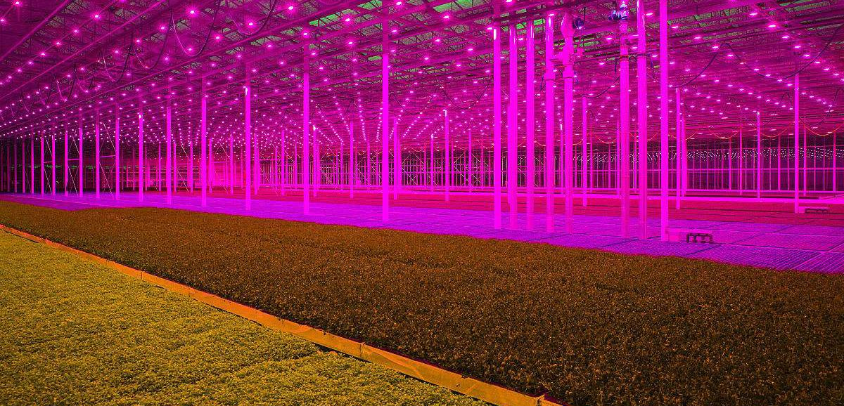Full Spectrum 1000w Led Grow Light Double Chip Led Plant Lamp Indoor Greenhouse Growing Garden Flowering Hydroponic Lights