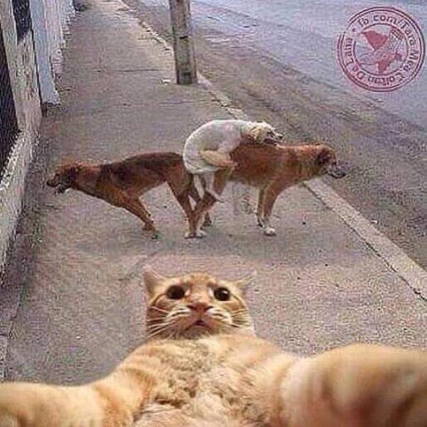 Selfie fauna en acción!!