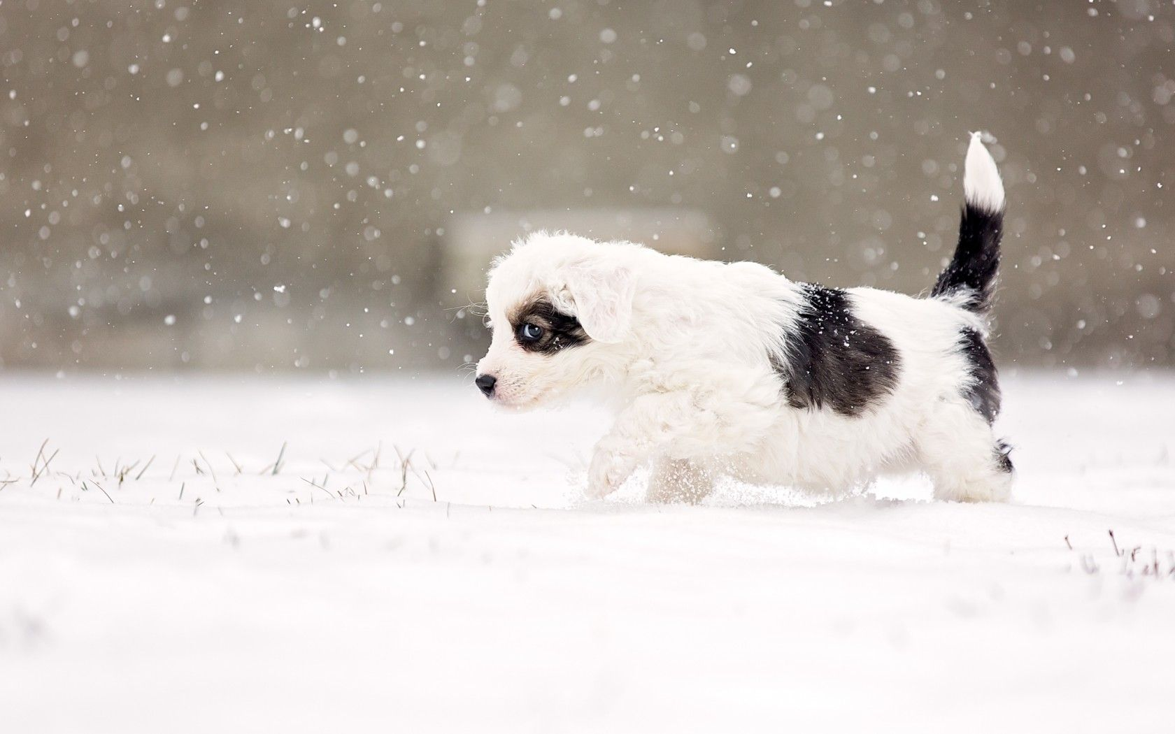 cute dogs wallpapers dog puppy desktop wallpapers pets