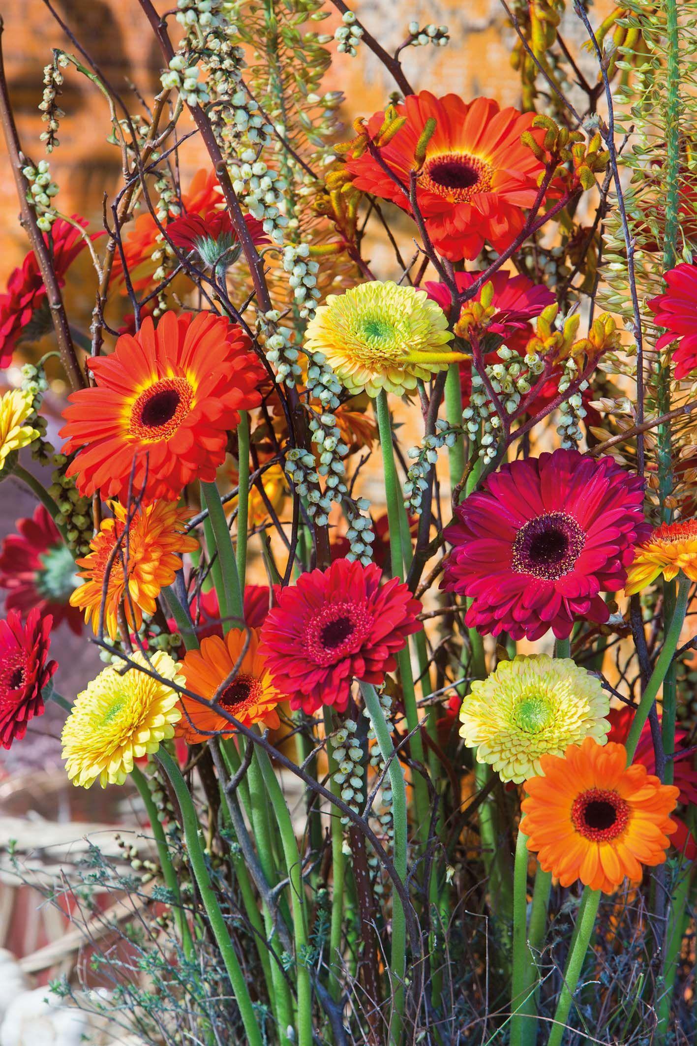 Close-up of a wonderful gerbera bouquet #orangegerberas #redgerberas #inspiration #colouredbygerbera #dutchgerbera