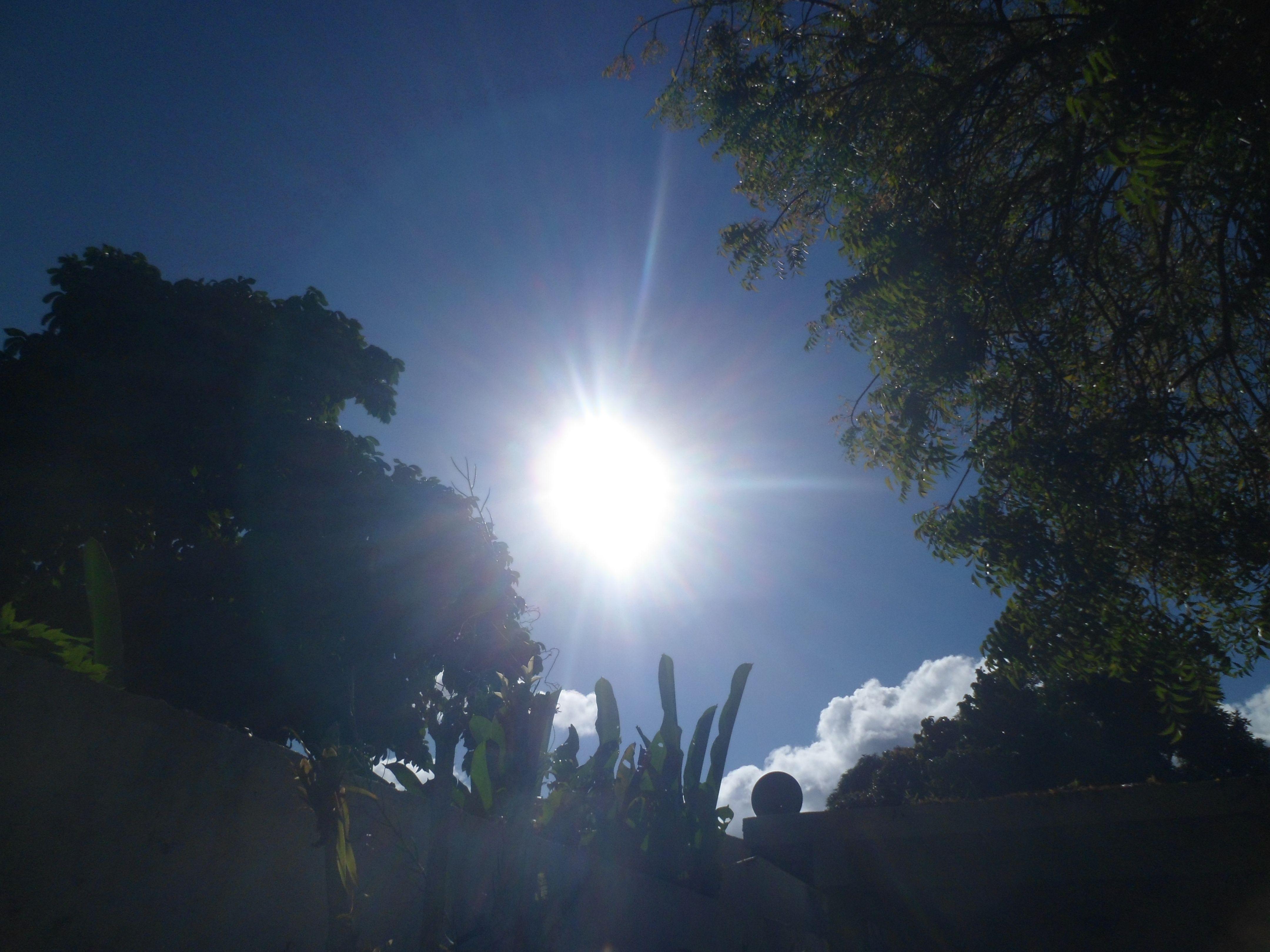 #sol #margarita