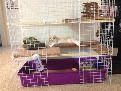 Lola S New Nic Home House Rabbit Bunny Cages Indoor Rabbit House