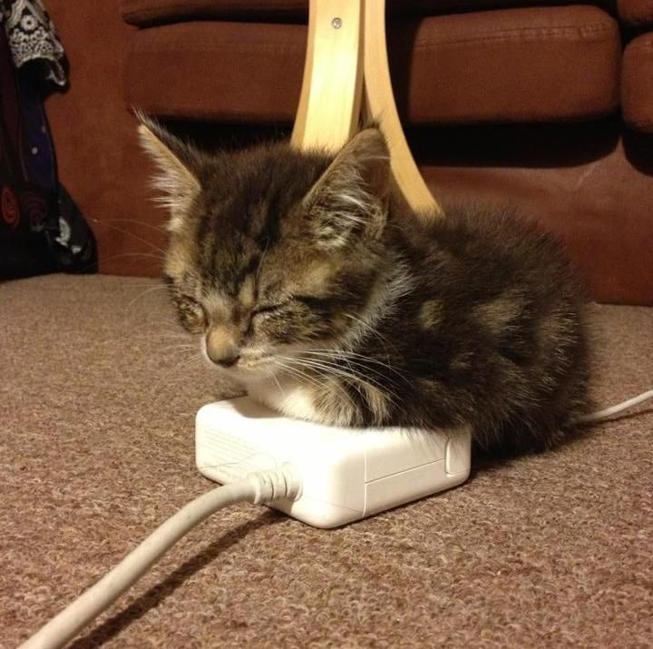 Image result for cat laying on charging cord gif